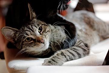 dwa koty bawią się razem leżą