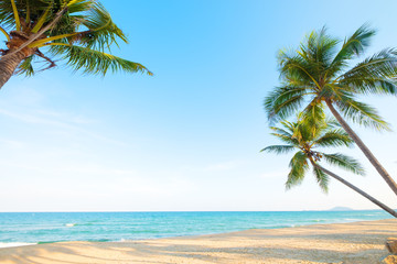 Fototapete - Beautiful landscape of coconut palm tree on tropical beach (seascape) in summer. Summer background concept.