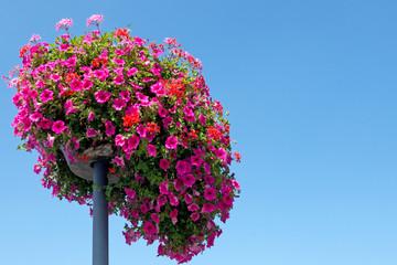 Blütenpracht, bunte Petunien und Geranien mit Textfreiraum