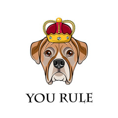 Bulldog in crown. Yoy rule.  illustration isolated on white