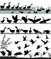 Silhouettes of gooses flying and floating on water