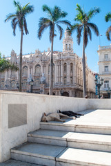 Famous theater in Cuba. Two dogs sleeps under the Great Theatre of Havana Alicia Alonso in Cuba.