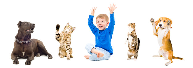 Group of a playful pets and cheerful boy isolated on white background