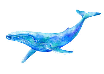 Big Blue Whale .Watercolor hand drawn illustration.Underwater animal art. White background.