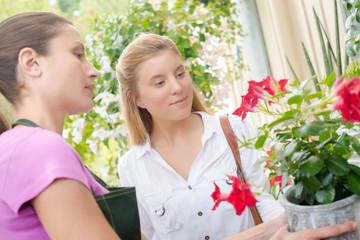 Florist advising a customer