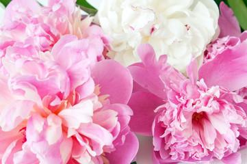 Beautiful peony flowers bunch