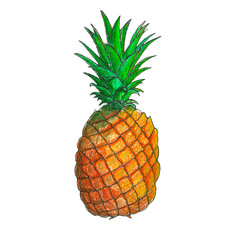 Juicy pineapple fruit illustration