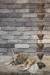 Cute cat relaxing in front of the brick wall