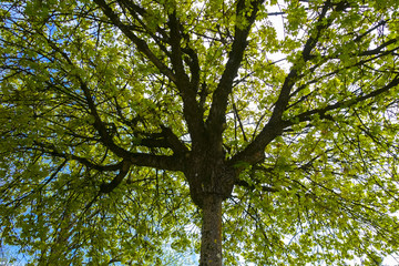 green nice tree leaves at a sunny day with blue sky