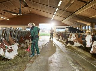 Smiling female farmer feeding cows in stable on a farm