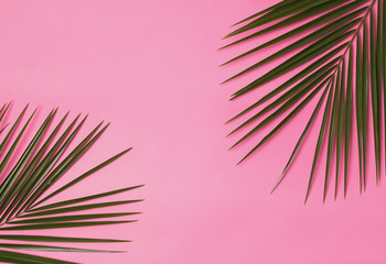Palm branches on the pink background