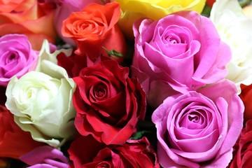 Rosen von oben