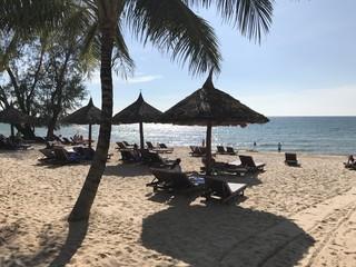 Plage Aruba Palmier