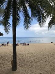 Palmier sur une plage de sable fin