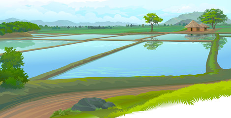 Rice fields and the farm house