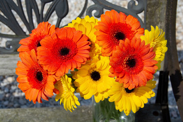 Gerber Daisy Bunch/A gorgeous and colorful bunch of Gerber Daisy's on a warm spring day.