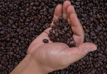 The farmers are sorting out the coffee beans.