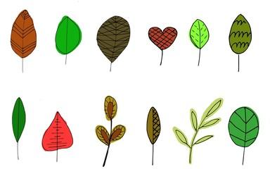 Blätter Illustration leaf handdrawn