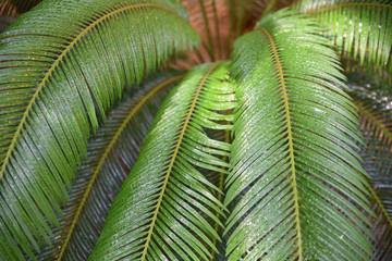 Palmier baigné de pluie