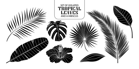 Set of isolated silhouette tropical leaves in 8 styles.