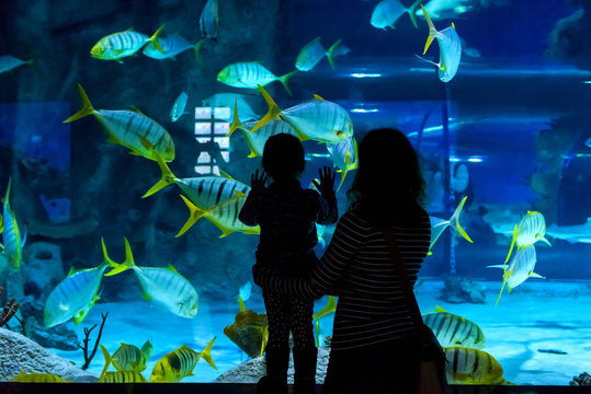 Young woman and her little child look at fish in large blue aquarium