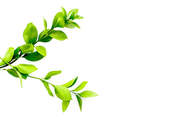 Summer background. Young sprig with green foliage on white top view space for text
