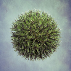 Thistle with textured background, overhead view