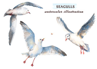 Beautiful seagull flying in the sky. Watercolor illustration, isolated on a white background.