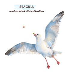Flying seagull catching his food in the air. Watercolor illustration, isolated on a white background.