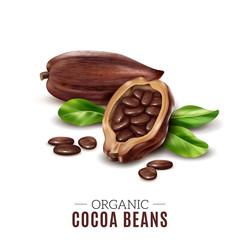 Realistic Cocoa Composition