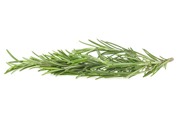 Twig of fresh rosemary isolated on a white background