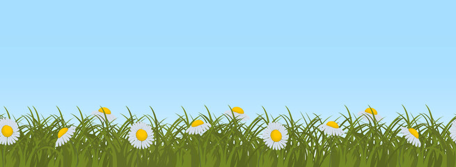 Daisies in green grass on a blue sky background. Border. Summer flowers. It can be used as a seamless sample. Vector illustration