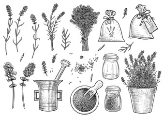 Supplies of lavender collection illustration, drawing, engraving, ink, line art, vector
