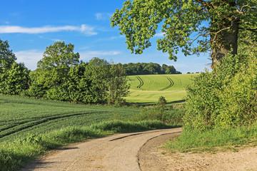 Feldweg durch Landschaft mit Weizen- und Gerstenfeldern, Bäumen und Sträuchern in der Holsteinischen Schweiz in Schleswig-Holstein