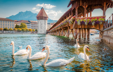 Foto op Aluminium Zwaan Historic town of Luzern with famous Chapel Bridge, Switzerland