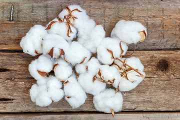 Beautiful white cotton flowers on rustic old vintage wooden flat lay background. Fabric cloth softness natural organic farm allergy concept