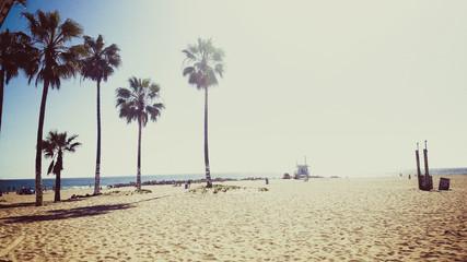 Palm Trees on Venice Beach on Sunny Day