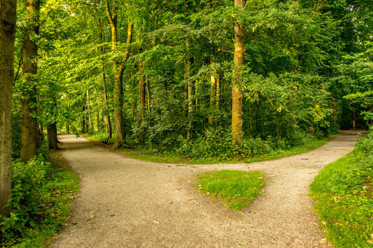 Muddy path parting into two at Haagse Bos, forest in The Hague