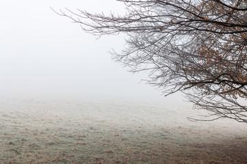 A foggy morning in Northeastern Pennsylvania
