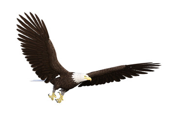 American bald eagle isolated on white, 3d render.