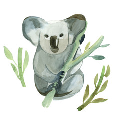 Watercolor koala is holding the bamboo branch