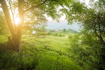 Green summer forest morning sunlight trees landscape