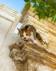 Kitten climbs headlong down a house wall, Rhodes, Greece