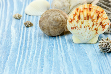 seashells on wooden blue painted boards. background summer holiday. macro view