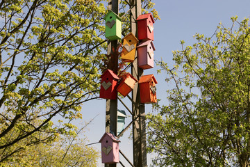 Birdhouses. Spring, at a noisy intersection in the city.