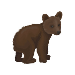 Little bear cub wild northern forest animal vector Illustration on a white background