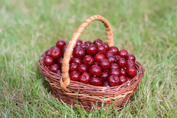 basket with a cherry on the grass