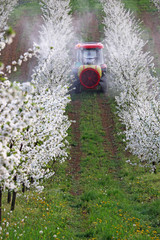tractor sprays insecticide in orchard agriculture