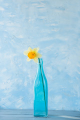 A flower of a daffodil in a blue bottle. Blue gentle colors and background, minimalism