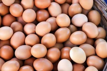 Organic eggs nature